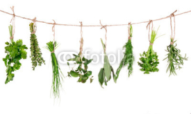 Fototapety Fresh herbs hanging isolated on white background