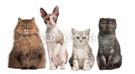 Naklejki Group of cats sitting in front of white background