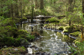 Fototapety Streaming creek in a mossy forest