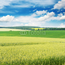 Fototapety Wheat field and blue sky