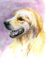 Fototapety Labrador golden retriever watercolor painted.