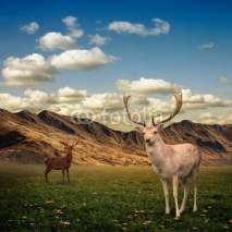 Obrazy i plakaty Two Male Stag Deer on a Meadow