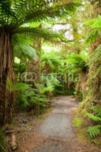 Fototapety Rainforest path
