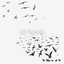 Fototapety pack of seagulls and swallows