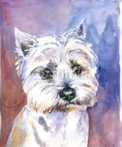 Fototapety Maltese dog watercolor painted