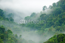 Naklejki rainforest morning fog