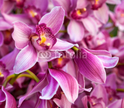 Naklejki Purples bouquet of orchids. Floral pattern.