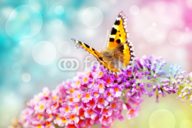 Fototapety butterfly on flower