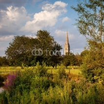 Obrazy i plakaty Evening summer sunshine on Salisbury Cathedral, Wiltshire