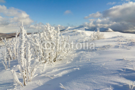 Naklejki winter mountains landscape, Bieszczady National Park, Poland
