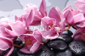 Naklejki Set of cattleya orchid flower and stone with water drops