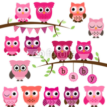 Obrazy i plakaty Vector Collection of Girl Baby Shower Themed Owls and Branches