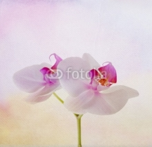 Naklejki soft card with orchid flower