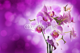 Naklejki Violet orchid on purple bokeh background