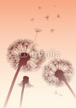 Fototapety vector dandelions in sepia with flying seeds