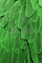 Fototapety Green Feathers