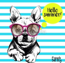 Obrazy i plakaty Vector close up portrait of french bulldog wearing the sunglassess. Bright hello summer french bulldog portrait. Hand drawn domestic pet dog illustration. Isolated on background with cerulean stripes.