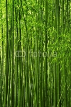 Fototapety Bamboo forest texture