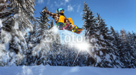 Fototapety snowboarders in the pine trees