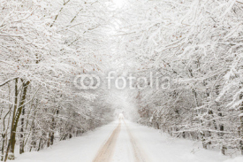 Naklejki Winter landscape with road surrounded by trees